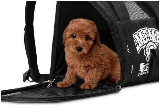 Pet Cat Dog Carrier Backpack