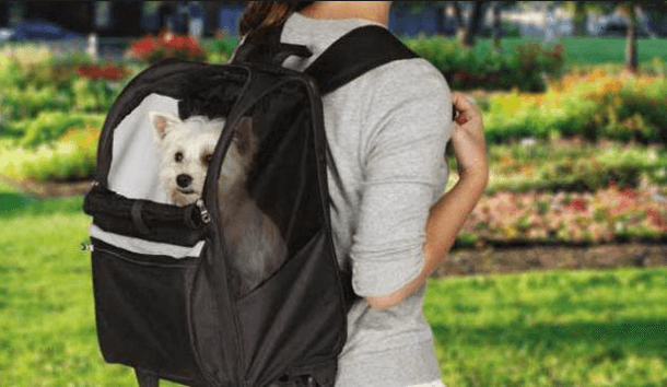 Best Dog Backpacks for Hiking & Camping with Reviews 2019