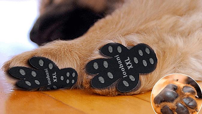 Dog Paw Protector