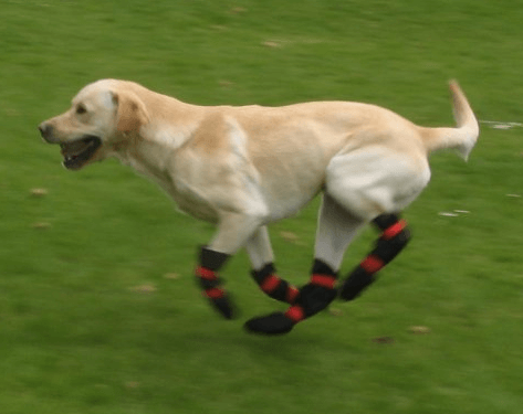 Pro-Active Paws Fully Waterproof Dog Boots