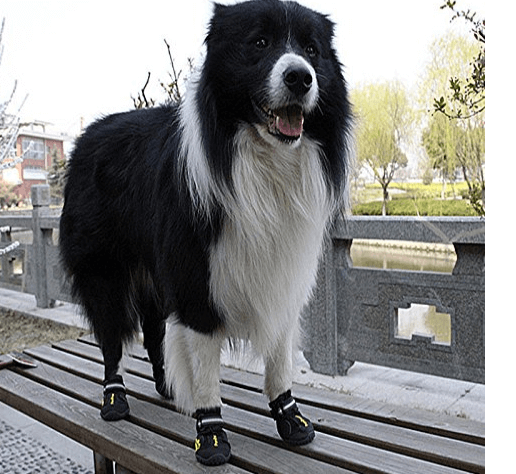 Waterproof Rugged Dog Shoes Pet Boots for Small Medium Large Dogs
