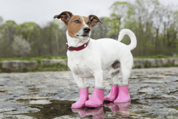 best dog boots for hunting dogs
