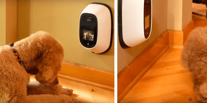 50+ Best Dog Monitor Cameras 2019 (HD, Secured, Wireless Webcams)