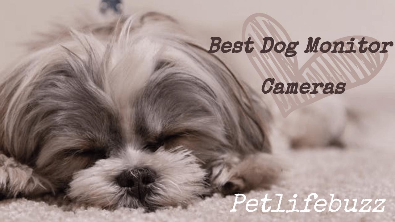 Best dog monitor cameras