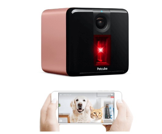 Video Camera to Monitor Your Dog or Cat