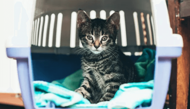 50+ Best Cat Carriers 2019 (Air Travel Approved, Portable & More)