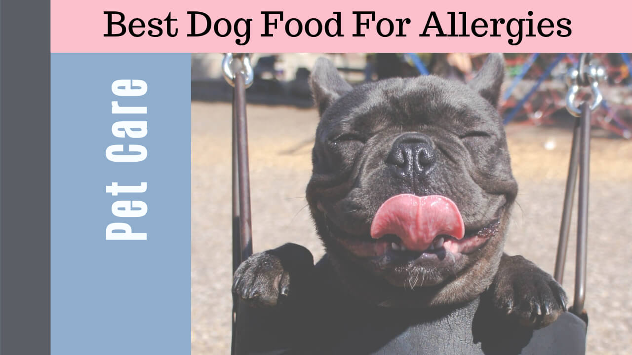 50 Best Dog Foods For Allergies at Every Budget 2019
