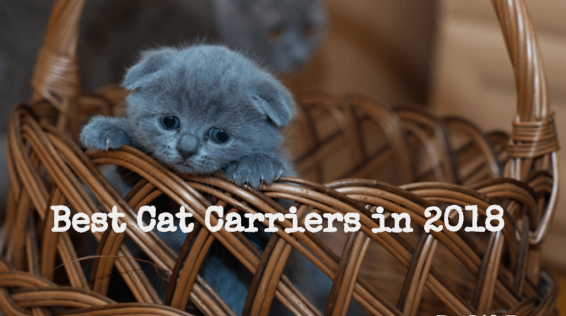 Top 50+ Best Cat Carriers 2018 (Top Rated & Airline Approved)