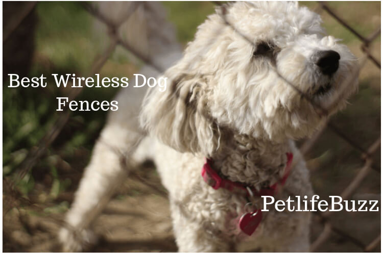 Best Wireless Dog Fences