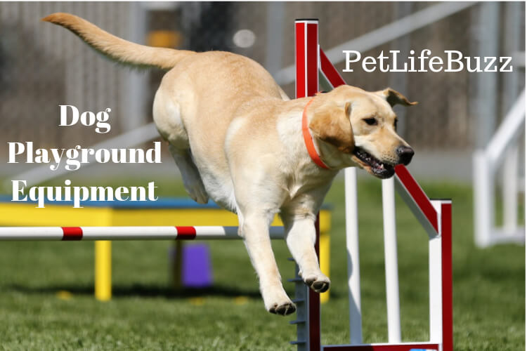 Dog Playground Equipment