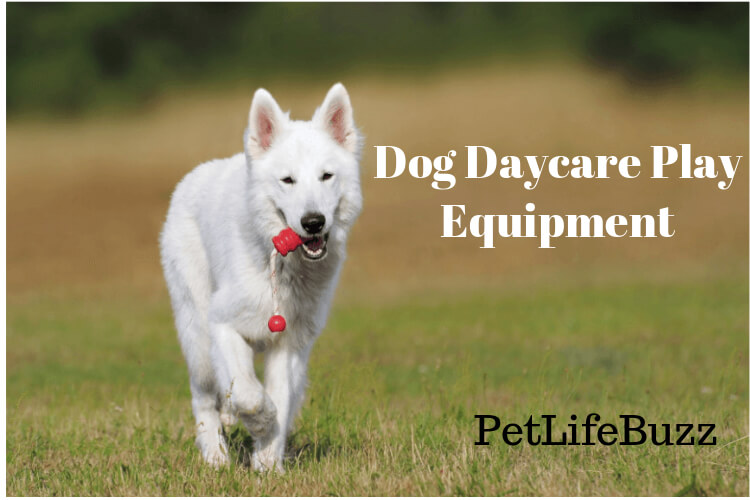 Dog Daycare Play Equipment
