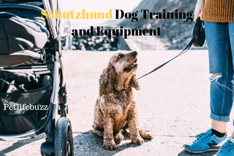 Schutzhund Dog Training & Best Equipment 2019