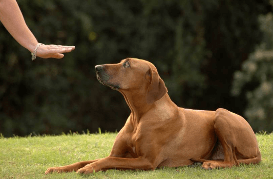 dog training commands