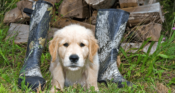 Dog Boots for Hunting