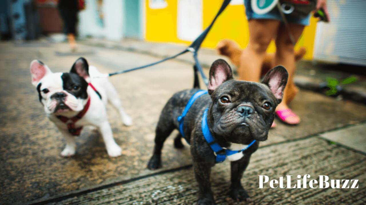 Dog Training to Heel