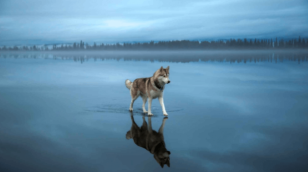 Best Shampoos for Husky Dogs