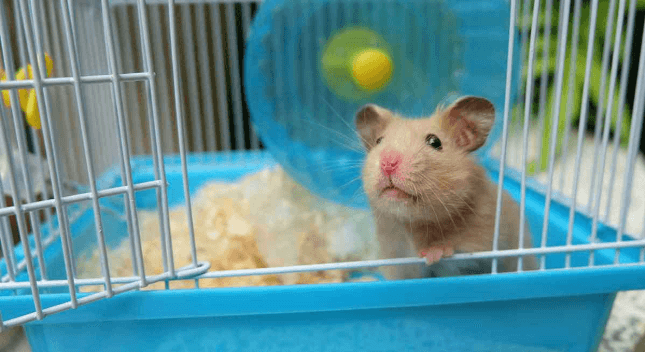 55 Unique and Best Hamster Cages for Your Loved Pets 2019