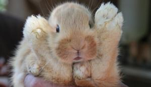 Bunny Happiness