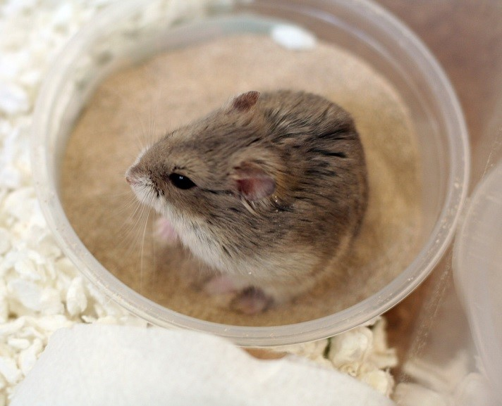 How to Take Care of a Hamster: A Complete Care Guide