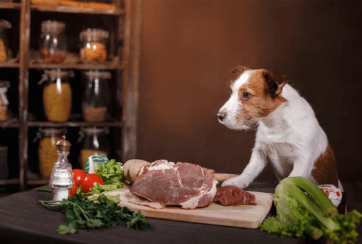 High Calorie Dog Food