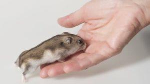 befriend your hamster