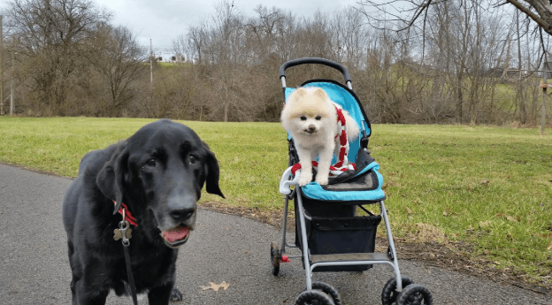 Best Dog Strollers & Carriers for Small, Medium, Large Pooches