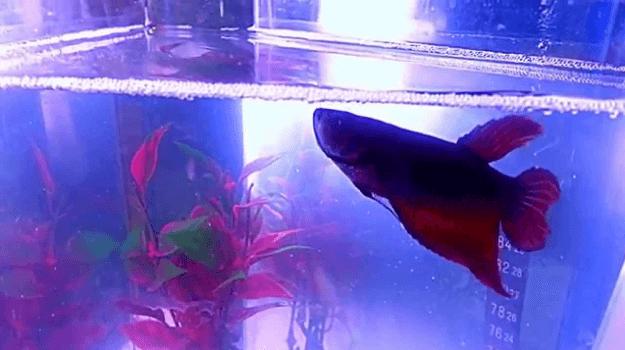 22 Best Betta Fish Tanks & Aquarium Kits 2019 (With Reviews)