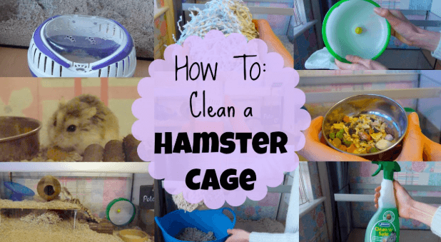 What Are Hamster Cages? and Things Around It (Cleaning Guide)
