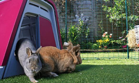 outdoor rabbit hutches