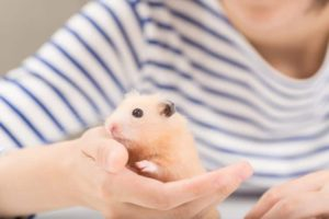 stop hamster from biting