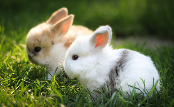 How to Set Up for Your Bunny: Guide to A Perfect Rabbit Home