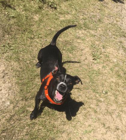 Best Dog Pics