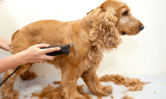 best dog clipper for thick coats