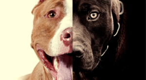 Best Dog Food for Pitbulls with Allergies