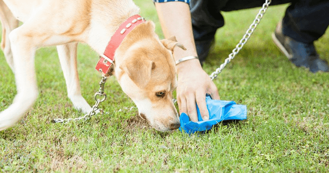 The Best Dog Poop Cleanup Tool – Dog Waste Cleanup Mess-Free
