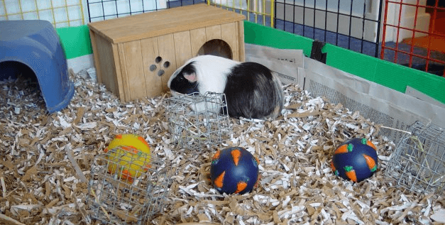 Best Guinea Pig Bedding