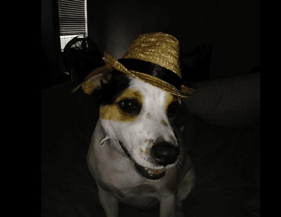 Cool Dog Image