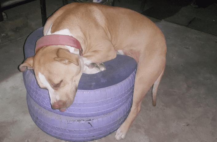 Sleepy Dog Image
