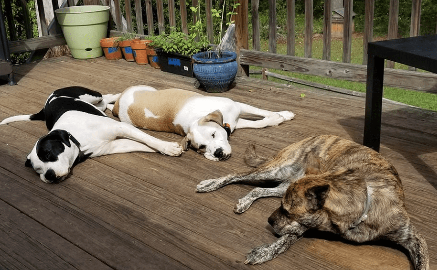 Lazy Dog Images