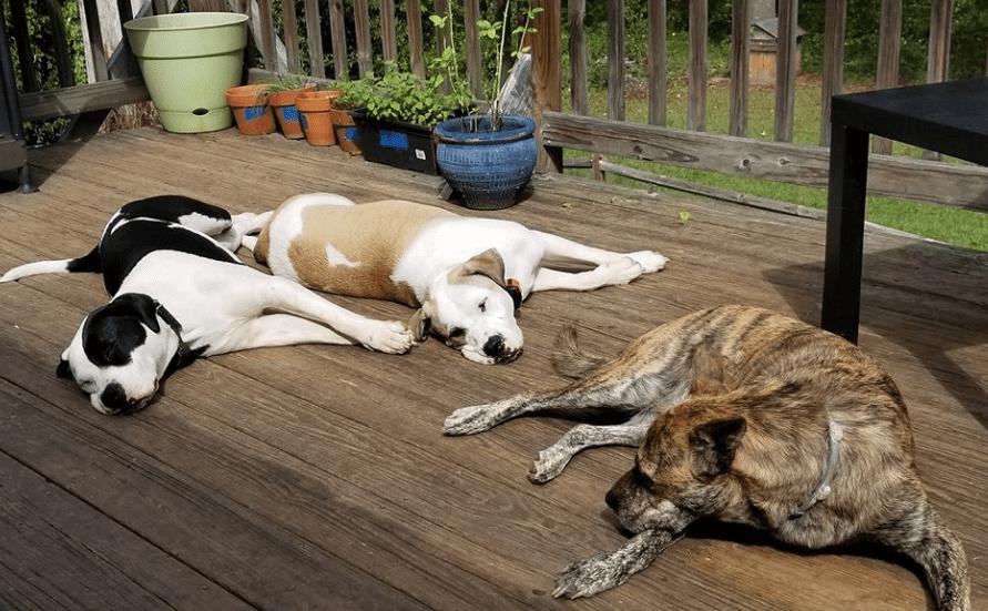 Lazy Dog Images