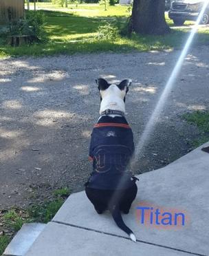 Dog Waiting Images