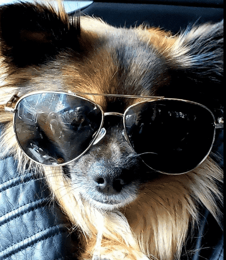 stylish dog images