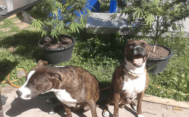 Brown dog images