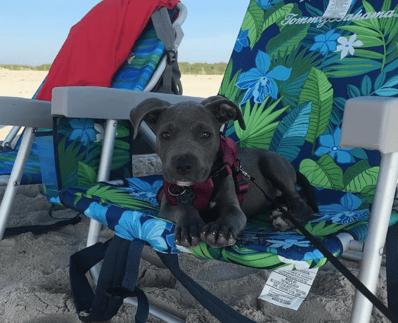 dog in beach images
