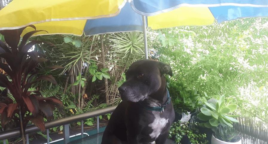 dog relaxing
