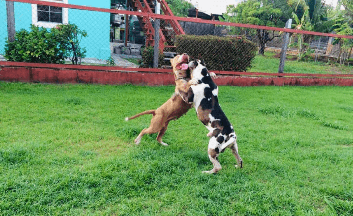 dog fighting images