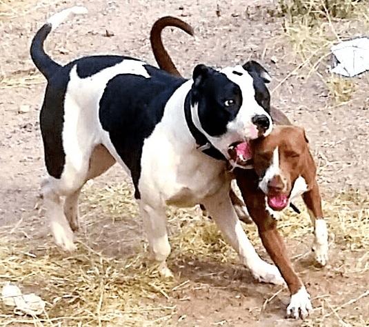 dog's fight