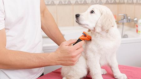 Trimming dog hair