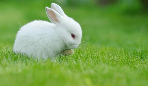 Best Bunny Food