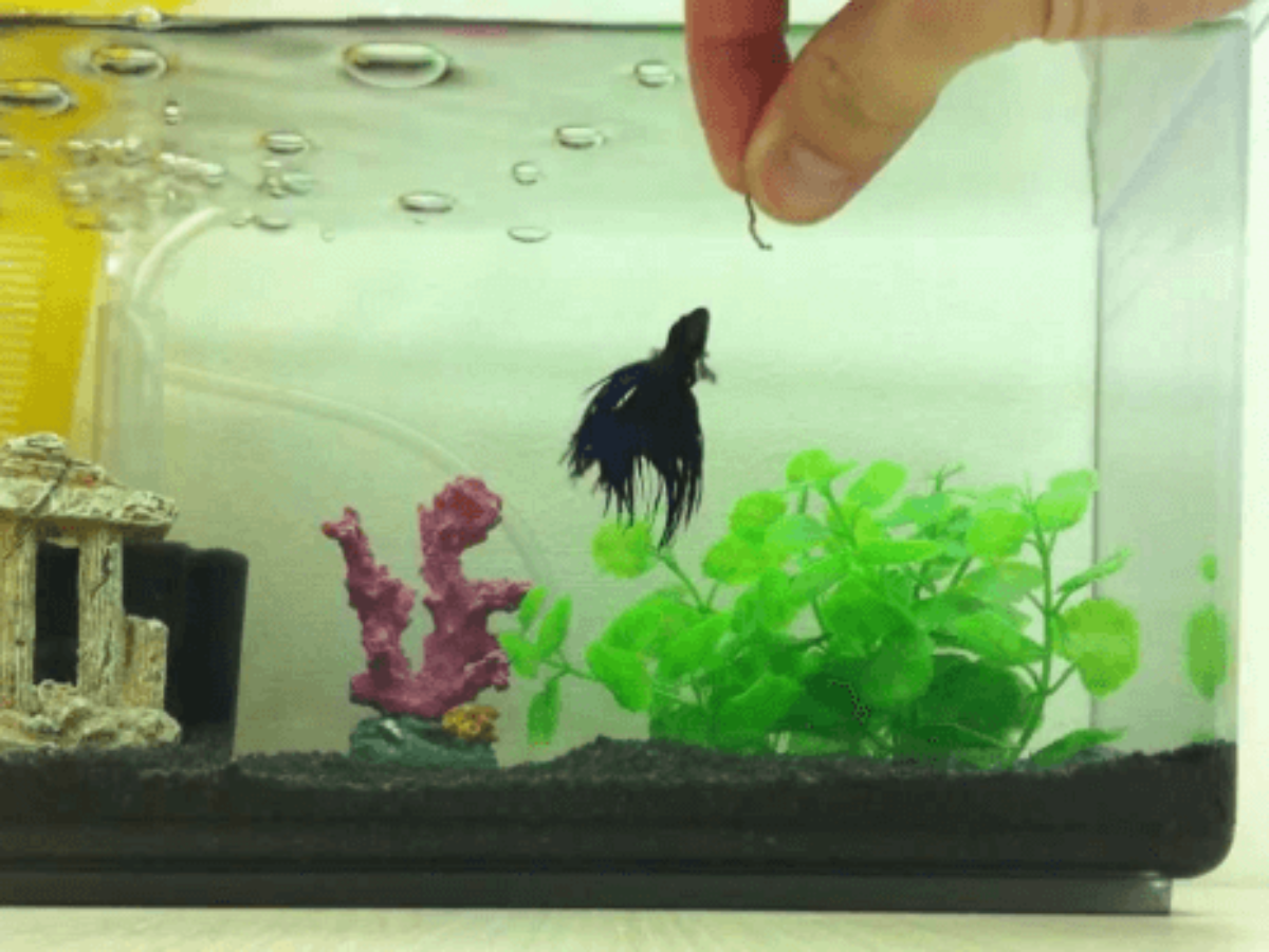 Top 25 Betta Fish Food In 2020 Buyers Guide Reviews